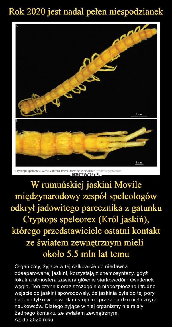 W rumuńskiej jaskini Movile międzynarodowy zespół speleologów odkrył jadowitego parecznika z gatunku Cryptops speleorex (Król jaskiń), którego przedstawiciele ostatni kontakt ze światem zewnętrznym mieli około 5,5 mln lat temu – Organizmy, żyjące w tej całkowicie do niedawna odseparowanej jaskini, korzystają z chemosyntezy, gdyż lokalna atmosfera zawiera głównie siarkowodór i dwutlenek węgla. Ten czynnik oraz szczególnie niebezpieczne i trudne wejście do jaskini spowodowały, że jaskinia była do tej pory badana tylko w niewielkim stopniu i przez bardzo nielicznych naukowców. Dlatego żyjące w niej organizmy nie miały żadnego kontaktu ze światem zewnętrznym. Aż do 2020 roku
