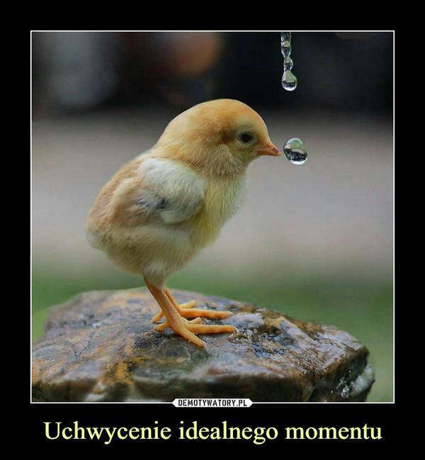 Uchwycenie idealnego momentu –