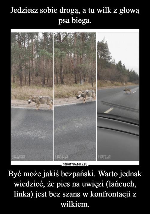 Jedziesz sobie drogą, a tu wilk z głową psa biega. Być może jakiś bezpański. Warto jednak wiedzieć, że pies na uwięzi (łańcuch, linka) jest bez szans w konfrontacji z wilkiem.