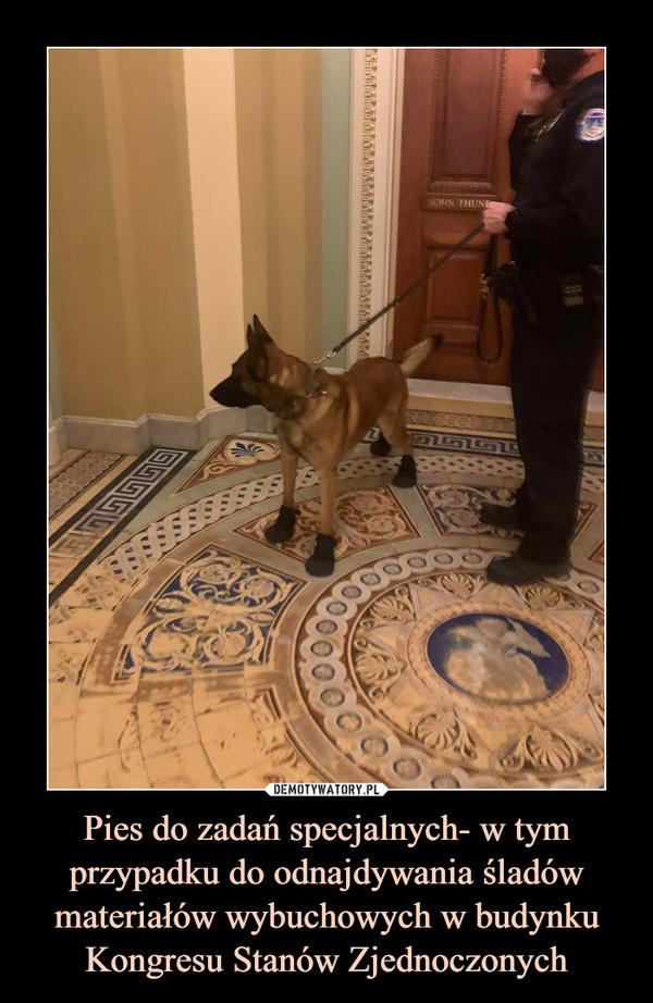 Pies do zadań specjalnych- w tym przypadku do odnajdywania śladów materiałów wybuchowych w budynku Kongresu Stanów Zjednoczonych –