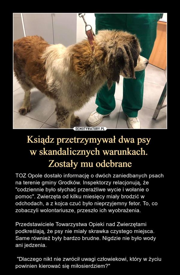 """Ksiądz przetrzymywał dwa psy w skandalicznych warunkach. Zostały mu odebrane – TOZ Opole dostało informację o dwóch zaniedbanych psach na terenie gminy Grodków. Inspektorzy relacjonują, że """"codziennie było słychać przeraźliwe wycie i wołanie o pomoc"""". Zwierzęta od kilku miesięcy miały brodzić w odchodach, a z kojca czuć było nieprzyjemny fetor. To, co zobaczyli wolontariusze, przeszło ich wyobrażenia.Przedstawiciele Towarzystwa Opieki nad Zwierzętami podkreślają, że psy nie miały skrawka czystego miejsca. Same również były bardzo brudne. Nigdzie nie było wody ani jedzenia. """"Dlaczego nikt nie zwrócił uwagi człowiekowi, który w życiu powinien kierować się miłosierdziem?"""""""