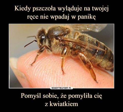 Kiedy pszczoła wyląduje na twojej ręce nie wpadaj w panikę Pomyśl sobie, że pomyliła cię z kwiatkiem