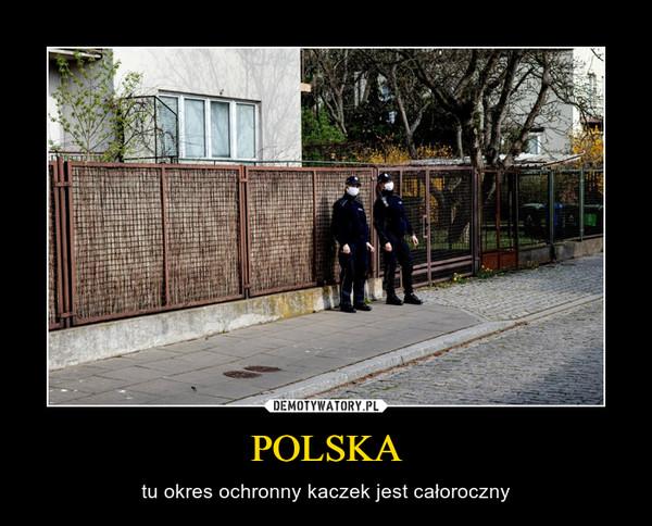POLSKA – tu okres ochronny kaczek jest całoroczny