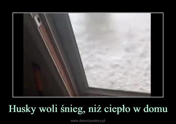 Husky woli śnieg, niż ciepło w domu –