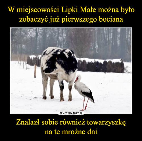 W miejscowości Lipki Małe można było zobaczyć już pierwszego bociana Znalazł sobie również towarzyszkę na te mroźne dni