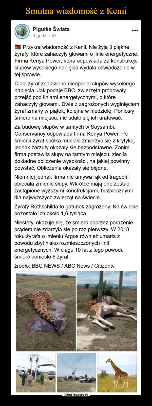 –  Smutna wiadomość z KeniiPigułka Świata3 godz. O...Przykra wiadomość z Kenii. Nie żyją 3 piękneżyrafy, które zahaczyły głowami o linie energetyczne.Firma Kenya Power, która odpowiada za konstrukcjesłupów wysokiego napięcia wydała oświadczenie wtej sprawie.Ciała żyraf znaleziono nieopodal słupów wysokiegonapięcia. Jak podaje BBC, zwierzęta próbowałyprzejść pod liniami energetycznymi, o którezahaczyły głowami. Dwie z zagrożonych wyginięciemżyraf zmarły w piątek, kolejna w niedzielę. Poniosłyśmierć na miejscu, nie udało się ich uratowaćZa budowę słupów w tamtych w SoysambuConservancy odpowiada firma Kenya Power. Pośmierci żyraf spółka musiała zmierzyć się z krytyką,jednak zarzuty okazały się bezpodstawne. Zanimfirma postawiła słupy na tamtym miejscu, zleciładokładne obliczenie wysokości, na jakiej powinnypowstać. Obliczenia okazały się błędne.Niemniej jednak firma nie umywa rąk od tragedii iobiecała zmienić słupy. Wkrótce mają one zostaćzastąpione wyższymi konstrukcjami, bezpiecznymidla najwyższych zwierząt na świecie.Żyrafy Rothschilda to gatunek zagrożony. Na świeciepozostało ich około 1,6 tysiąca.Niestety, okazuje się, że śmierć poprzez porażenieprądem nie zdarzyła się po raz pierwszy. W 2018roku żyrafa o imieniu Argos również umarła zpowodu zbyt nisko rozmieszczonych liniienergetycznych. W ciągu 10 lat z tego powoduśmierć poniosło 6 żyraf.źródło: BBC NEWS / ABC News / CitizentvDEMOTYWATORY.PL
