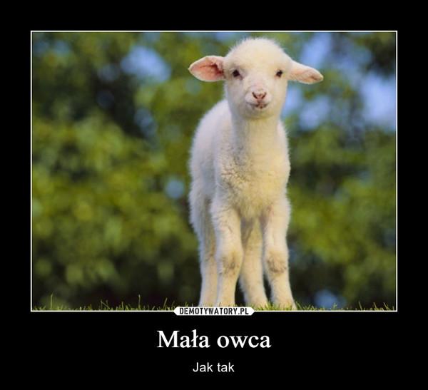 Mała owca – Jak tak