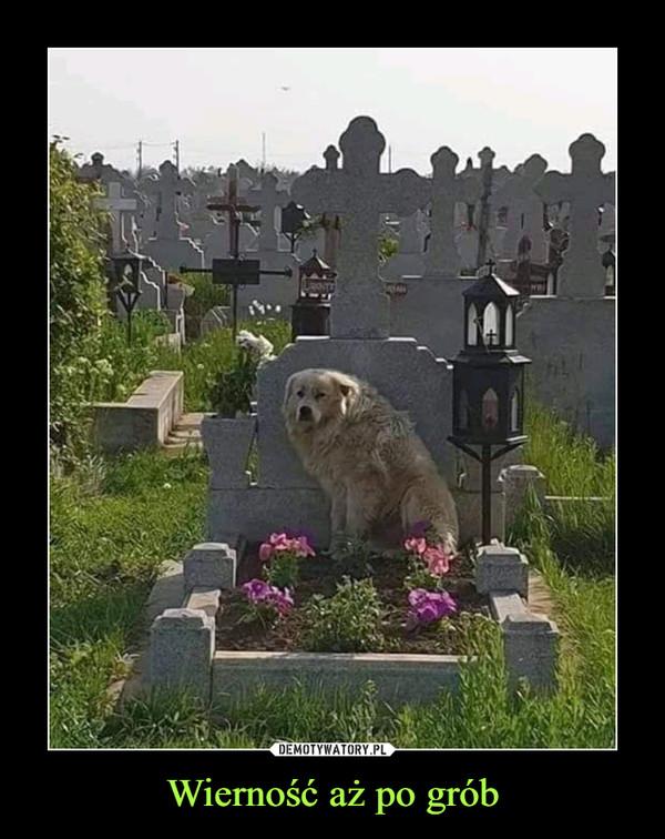 Wierność aż po grób –