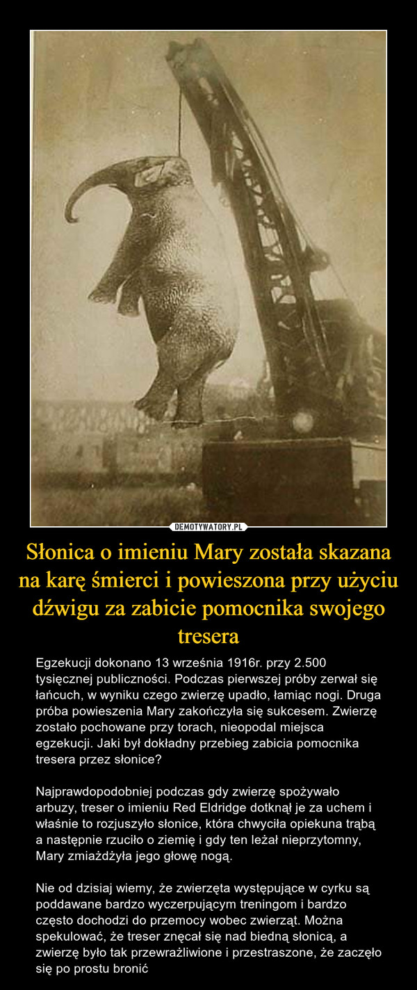 Słonica o imieniu Mary została skazana na karę śmierci i powieszona przy użyciu dźwigu za zabicie pomocnika swojego tresera – Egzekucji dokonano 13 września 1916r. przy 2.500 tysięcznej publiczności. Podczas pierwszej próby zerwał się łańcuch, w wyniku czego zwierzę upadło, łamiąc nogi. Druga próba powieszenia Mary zakończyła się sukcesem. Zwierzę zostało pochowane przy torach, nieopodal miejsca egzekucji. Jaki był dokładny przebieg zabicia pomocnika tresera przez słonice?Najprawdopodobniej podczas gdy zwierzę spożywało arbuzy, treser o imieniu Red Eldridge dotknął je za uchem i właśnie to rozjuszyło słonice, która chwyciła opiekuna trąbą a następnie rzuciło o ziemię i gdy ten leżał nieprzytomny, Mary zmiażdżyła jego głowę nogą.Nie od dzisiaj wiemy, że zwierzęta występujące w cyrku są poddawane bardzo wyczerpującym treningom i bardzo często dochodzi do przemocy wobec zwierząt. Można spekulować, że treser znęcał się nad biedną słonicą, a zwierzę było tak przewrażliwione i przestraszone, że zaczęło się po prostu bronić