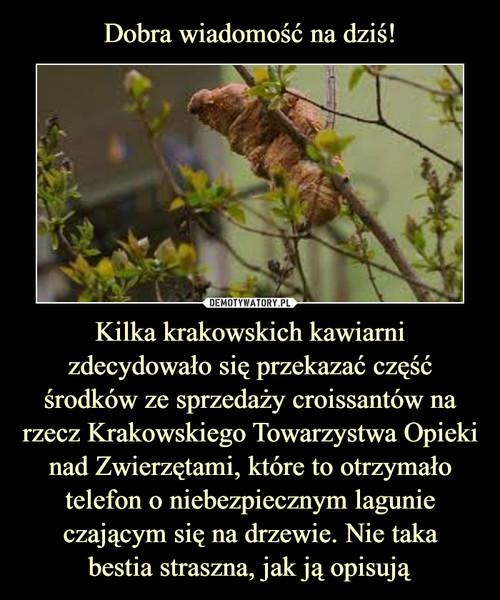 Dobra wiadomość na dziś! Kilka krakowskich kawiarni zdecydowało się przekazać część środków ze sprzedaży croissantów na rzecz Krakowskiego Towarzystwa Opieki nad Zwierzętami, które to otrzymało telefon o niebezpiecznym lagunie czającym się na drzewie. Nie taka bestia straszna, jak ją opisują