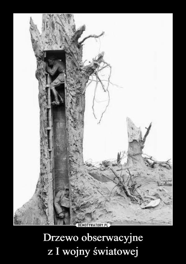 Drzewo obserwacyjne z I wojny światowej