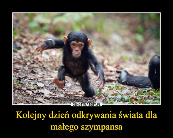 Kolejny dzień odkrywania świata dla małego szympansa –