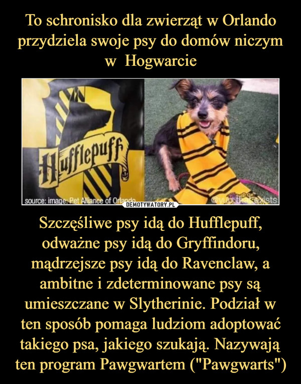 """Szczęśliwe psy idą do Hufflepuff, odważne psy idą do Gryffindoru, mądrzejsze psy idą do Ravenclaw, a ambitne i zdeterminowane psy są umieszczane w Slytherinie. Podział w ten sposób pomaga ludziom adoptować takiego psa, jakiego szukają. Nazywają ten program Pawgwartem (""""Pawgwarts"""") –"""