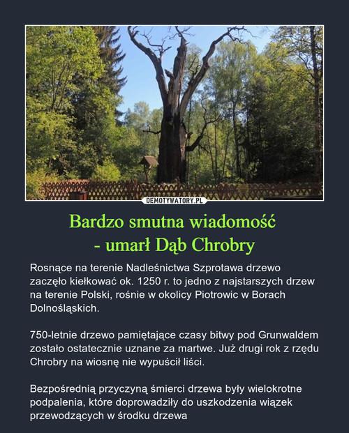 Bardzo smutna wiadomość  - umarł Dąb Chrobry
