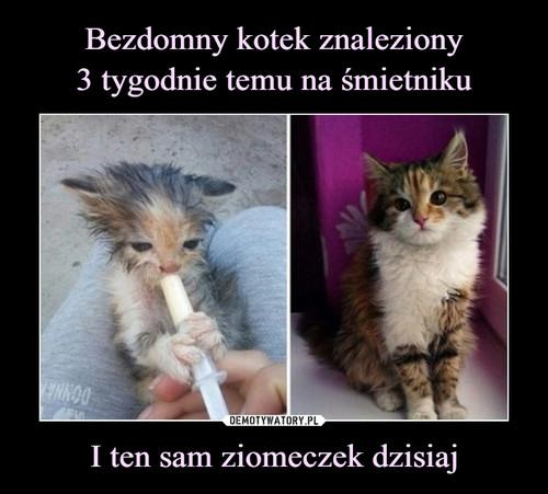 Bezdomny kotek znaleziony 3 tygodnie temu na śmietniku I ten sam ziomeczek dzisiaj