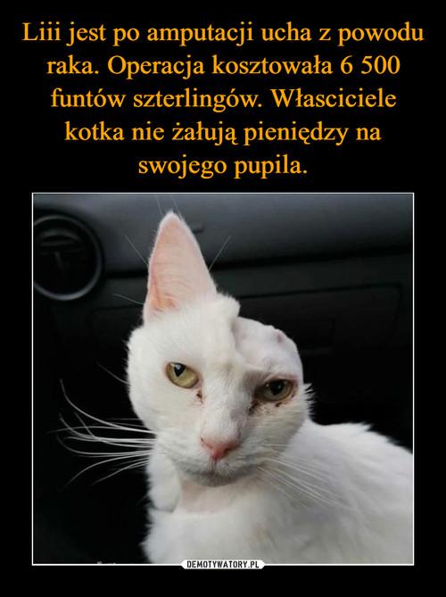 Liii jest po amputacji ucha z powodu raka. Operacja kosztowała 6 500 funtów szterlingów. Własciciele kotka nie żałują pieniędzy na swojego pupila.