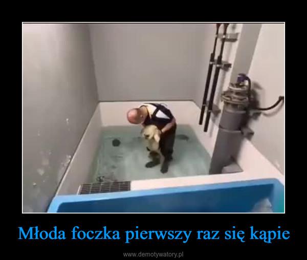 Młoda foczka pierwszy raz się kąpie –