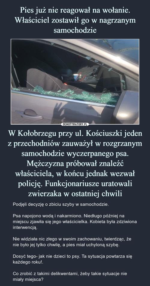 Pies już nie reagował na wołanie. Właściciel zostawił go w nagrzanym samochodzie W Kołobrzegu przy ul. Kościuszki jeden z przechodniów zauważył w rozgrzanym samochodzie wyczerpanego psa. Mężczyzna próbował znaleźć właściciela, w końcu jednak wezwał policję. Funkcjonariusze uratowali zwierzaka w ostatniej chwili