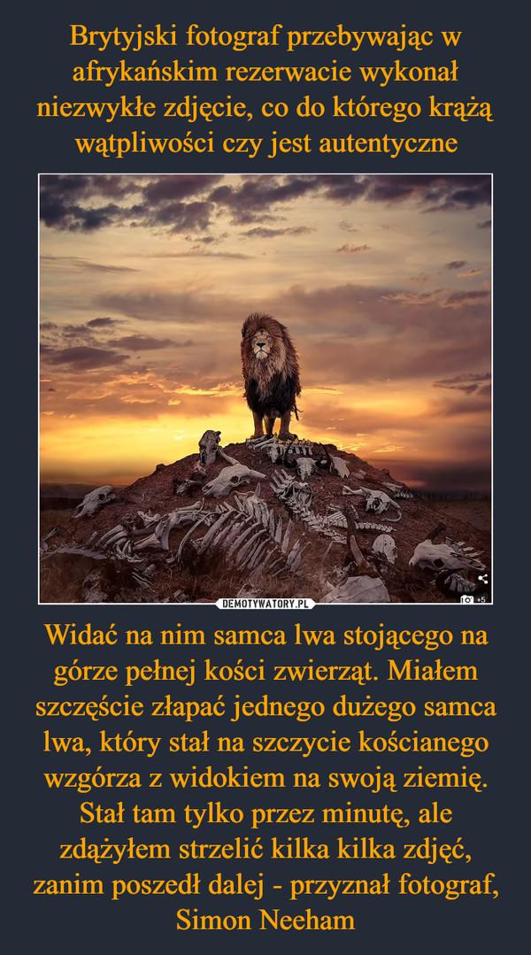 Widać na nim samca lwa stojącego na górze pełnej kości zwierząt. Miałem szczęście złapać jednego dużego samca lwa, który stał na szczycie kościanego wzgórza z widokiem na swoją ziemię. Stał tam tylko przez minutę, ale zdążyłem strzelić kilka kilka zdjęć, zanim poszedł dalej - przyznał fotograf, Simon Neeham –
