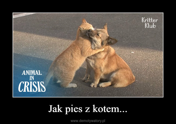 Jak pies z kotem... –