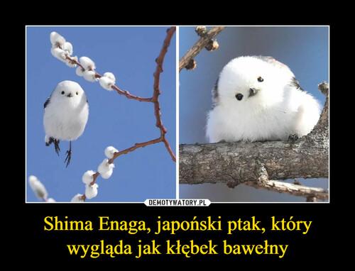 Shima Enaga, japoński ptak, który wygląda jak kłębek bawełny