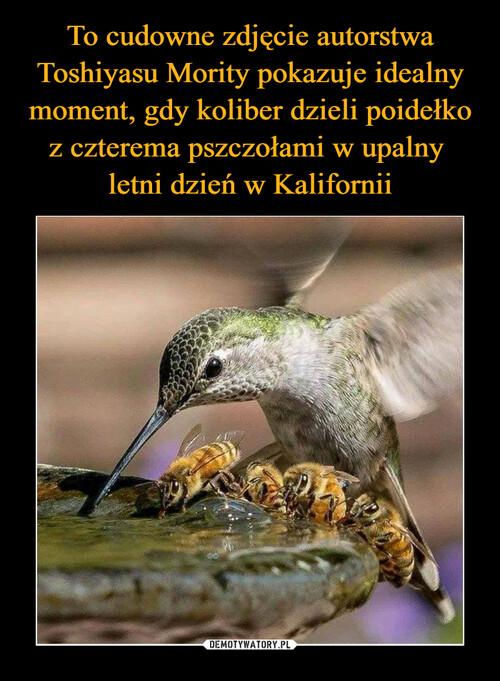 To cudowne zdjęcie autorstwa Toshiyasu Mority pokazuje idealny moment, gdy koliber dzieli poidełko z czterema pszczołami w upalny  letni dzień w Kalifornii