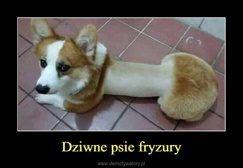 Dziwne psie fryzury